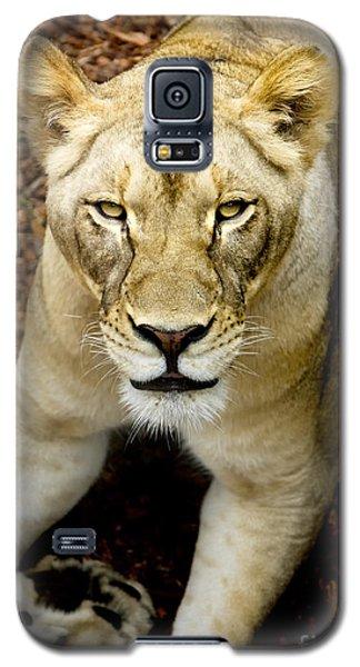 Lion-wildlife Galaxy S5 Case