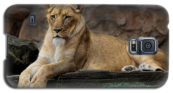 Lioness Galaxy S5 Case by D Wallace