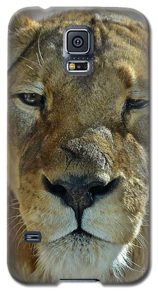 Lioness Portrait Galaxy S5 Case