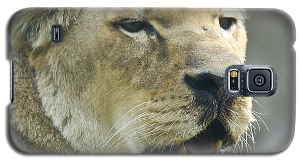 Galaxy S5 Case featuring the photograph Lioness by Richard Lynch