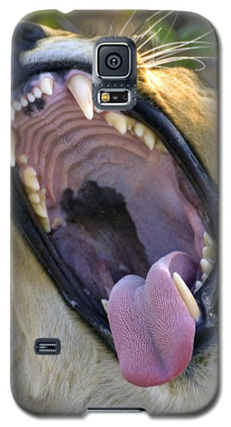 Galaxy S5 Case featuring the photograph Lion's Roar by Dennis Cox WorldViews
