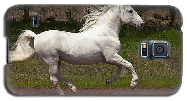 Galaxy S5 Case featuring the photograph Lipizzan At Liberty D5809 by Wes and Dotty Weber