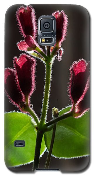Galaxy S5 Case featuring the photograph Lipstick Flower by Vladimir Kholostykh