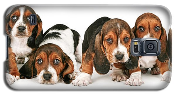 Litter Of Basset Hound Puppies Galaxy S5 Case