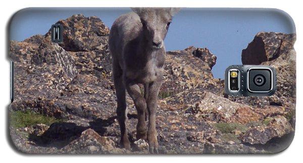 Little Big Horn Sheep Looking Galaxy S5 Case