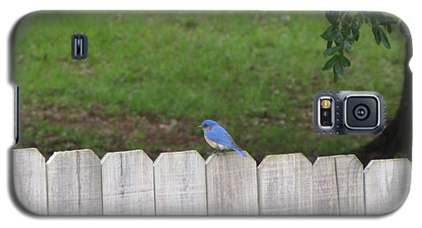 Galaxy S5 Case featuring the photograph Little Bird by Beth Vincent
