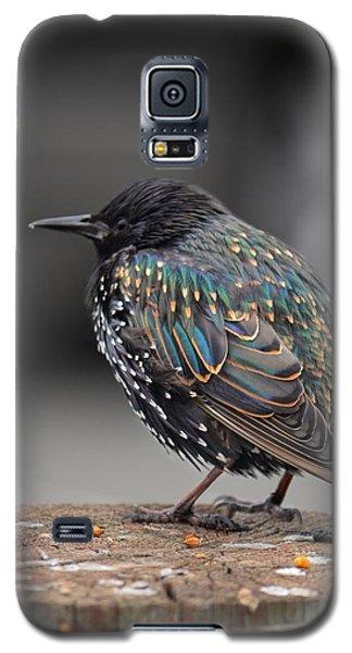 Little Bird In Pacifica Galaxy S5 Case by Alex King