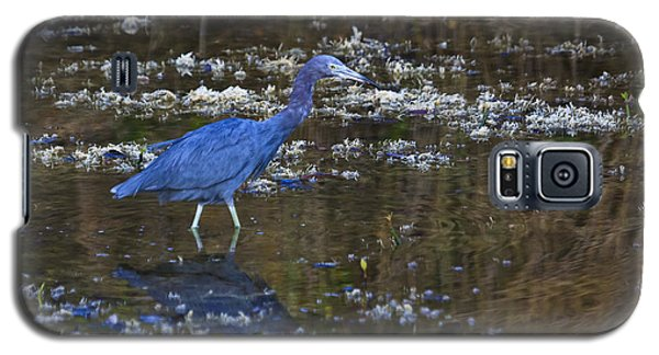 Galaxy S5 Case featuring the photograph Little Blue Heron by Gary Hall