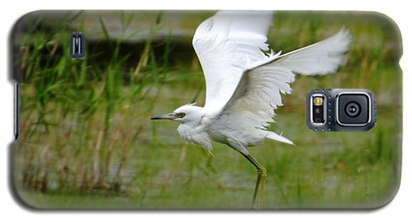 Little Blue Heron In Flight Galaxy S5 Case