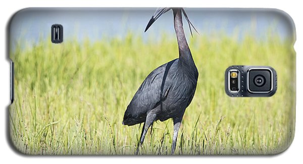 Little Blue Heron In The Marsh Galaxy S5 Case