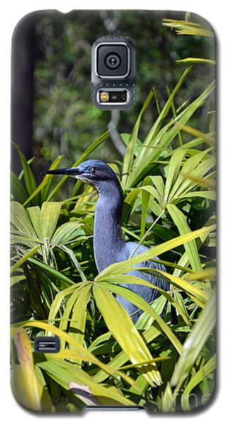 Galaxy S5 Case featuring the photograph Little Blue Heron by Robert Meanor