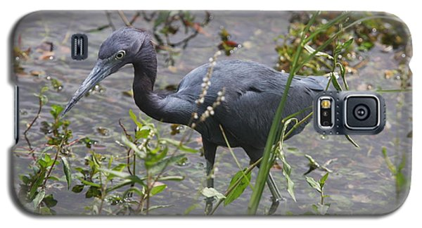 Galaxy S5 Case featuring the photograph Little Blue Heron - Waiting For Prey by Christiane Schulze Art And Photography