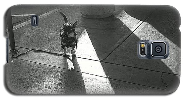 Galaxy S5 Case featuring the photograph Little Dog Big Shadow by Lennie Green
