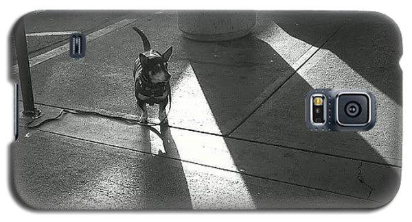 Little Dog Big Shadow Galaxy S5 Case