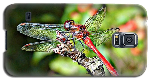 Galaxy S5 Case featuring the photograph Little Dragonfly by Morag Bates