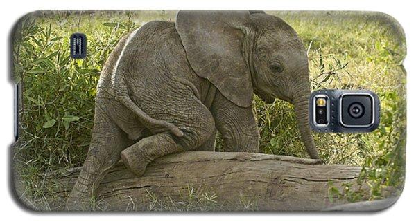 Little Elephant Big Log Galaxy S5 Case