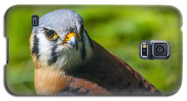 Little Falcon Galaxy S5 Case