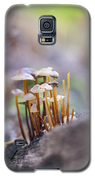 Galaxy S5 Case featuring the photograph Little Fungi World by David Isaacson