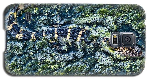 Little Gator Galaxy S5 Case by Don Durfee