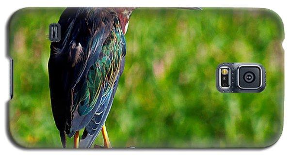 Little Green Heron 002  Galaxy S5 Case by Chris Mercer
