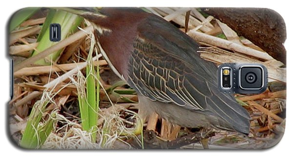 Galaxy S5 Case featuring the photograph Little Green Heron by Donna Brown