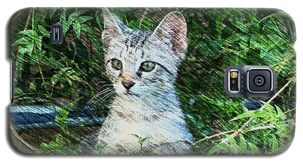 Galaxy S5 Case featuring the photograph Little Kitten by Kathy Churchman