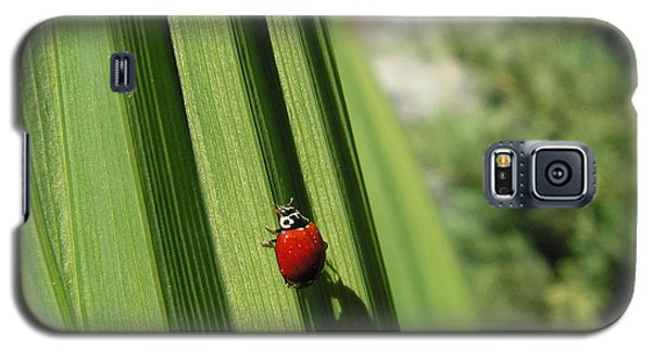 Galaxy S5 Case featuring the photograph Ladybird by Cheryl Hoyle