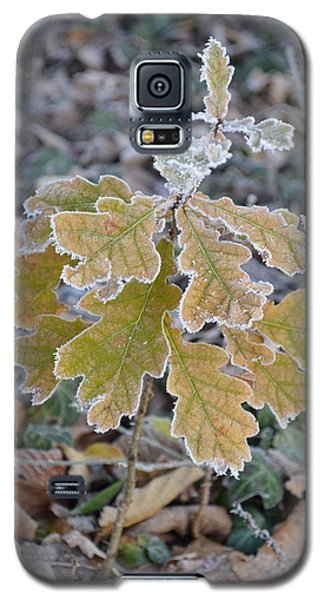Galaxy S5 Case featuring the photograph Little Oak by Felicia Tica