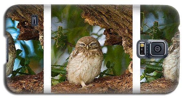 Little Owl Triptych Galaxy S5 Case