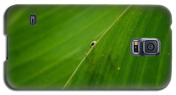 Little Peeper  Galaxy S5 Case