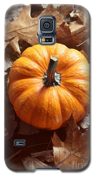 Little Pumpkin In A Bunch Of Leaves Galaxy S5 Case