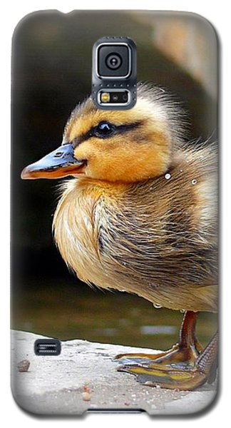 Galaxy S5 Case featuring the photograph Little Quack by Morag Bates