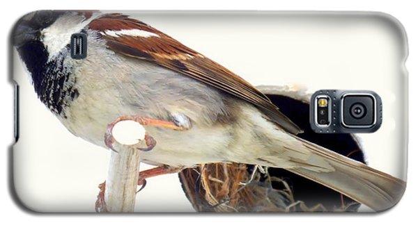 Little Sparrow Galaxy S5 Case by Karen Wiles