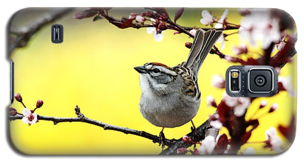 Galaxy S5 Case featuring the photograph Little Sparrow by Trina  Ansel