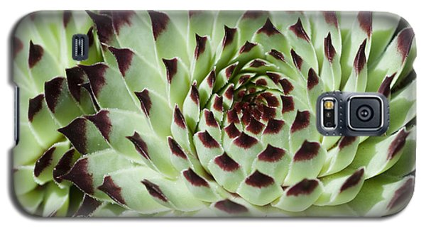 Galaxy S5 Case featuring the photograph Live-for-ever by Lana Enderle