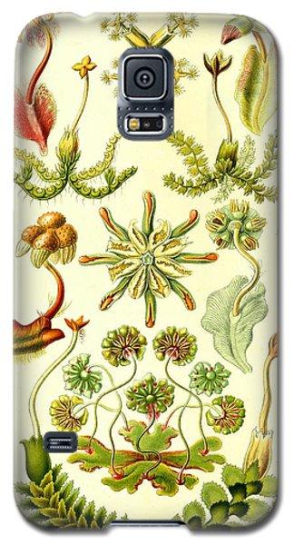Liverworts Moss Brunnenlebermoos Haeckel Hepaticae Galaxy S5 Case