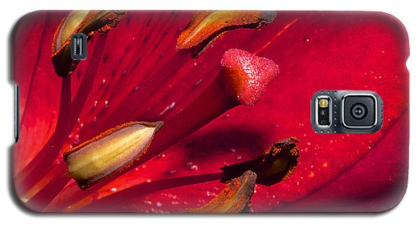 Living Inside A Lily Galaxy S5 Case by Phyllis Denton
