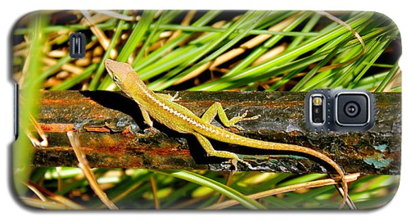 Galaxy S5 Case featuring the photograph Lizard by Cyril Maza