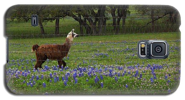 Llama In Bluebonnets Galaxy S5 Case