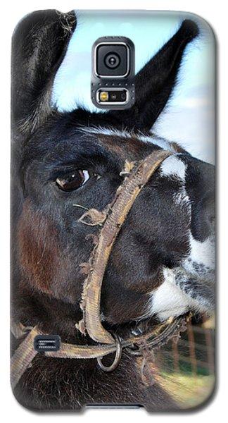 Llama Mama Galaxy S5 Case