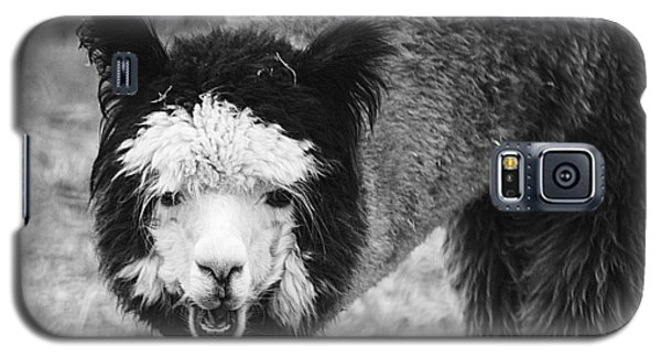 Llama Galaxy S5 Case