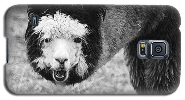 Llama Galaxy S5 Case by Yulia Kazansky
