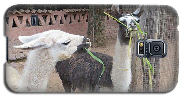 Llamas In Peru Galaxy S5 Case