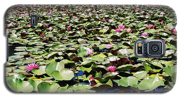 Galaxy S5 Case featuring the photograph Loads Of Lilies by Cathie Douglas