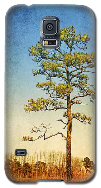 Loblolly Pine Along The Chesapeake Galaxy S5 Case