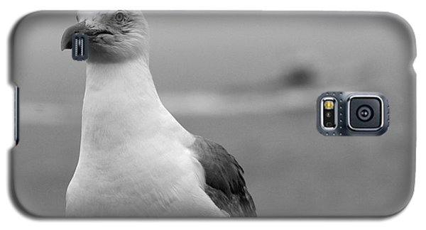 Lobster Boat Gull Galaxy S5 Case