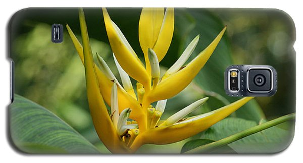 Galaxy S5 Case featuring the photograph Lobster Claw by B Wayne Mullins