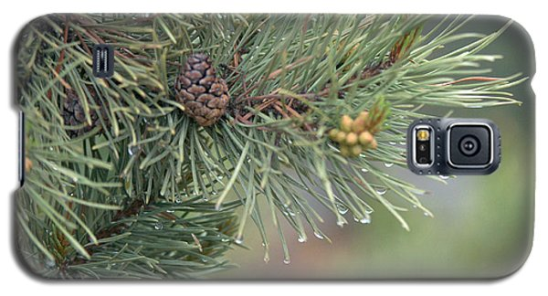 Lodge Pole Pine In The Fog Galaxy S5 Case