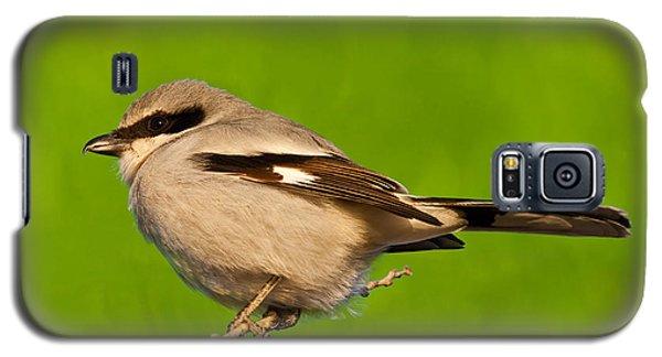 Loggerhead Shrike Galaxy S5 Case