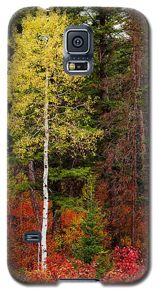 Lone Aspen In Fall Galaxy S5 Case by Chad Dutson